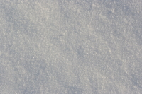 A picture of fresh snow!